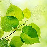 Servietten, 3-lagig 1/4-Falz 33 cm x 33 cm Green Leaves, Papstar (84761), 200 Stück