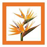 Servietten, 3-lagig 1/4-Falz 33 cm x 33 cm orange Oiseau de Paradis, Papstar (87727), 200 Stück
